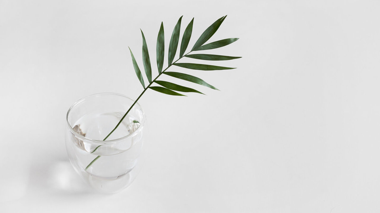 Leaf with a Glass of Water